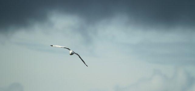Steel Birds