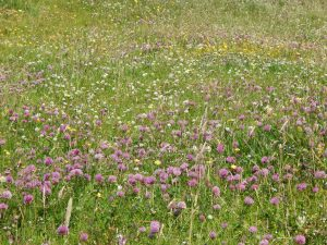 Machair, Tiree