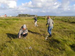 seed collecting for bee conservation Tiree